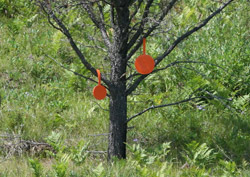 Self-sealing targets in Tree